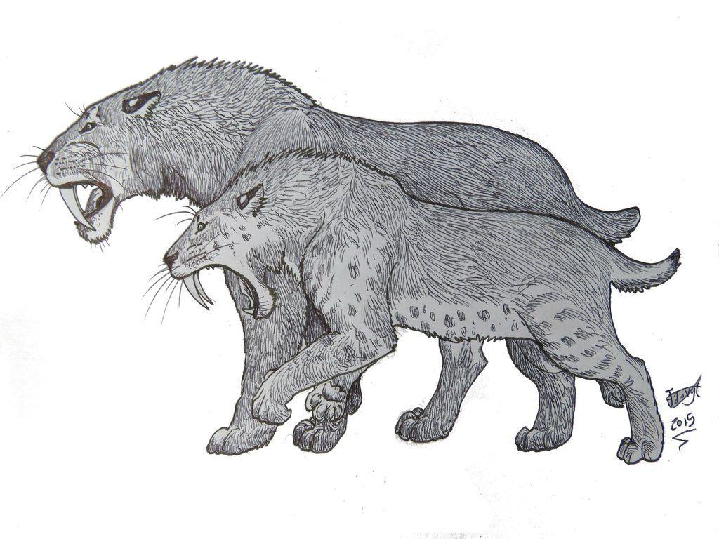Smilodon Face By Pyroraptor42 On Deviantart: Smilodon By HodariNundu On DeviantArt