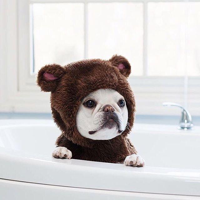 Good Look Alike Chubby Adorable Dog - 1c187be92db249d526f8a86a6fb98ece  HD_764362  .jpg