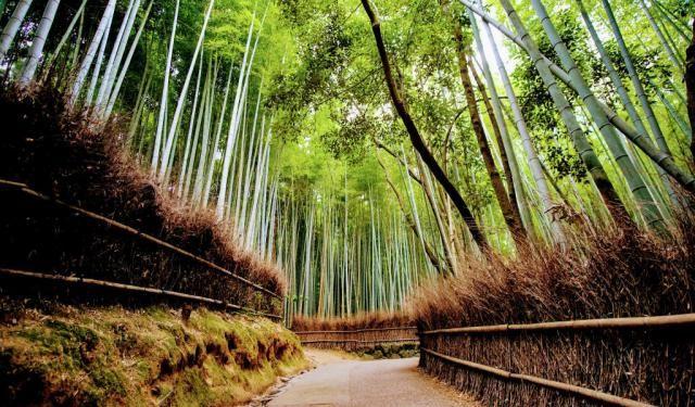Arashiyama and Bamboo Grove Walking Tour (Self Guided), Kyoto, Japan