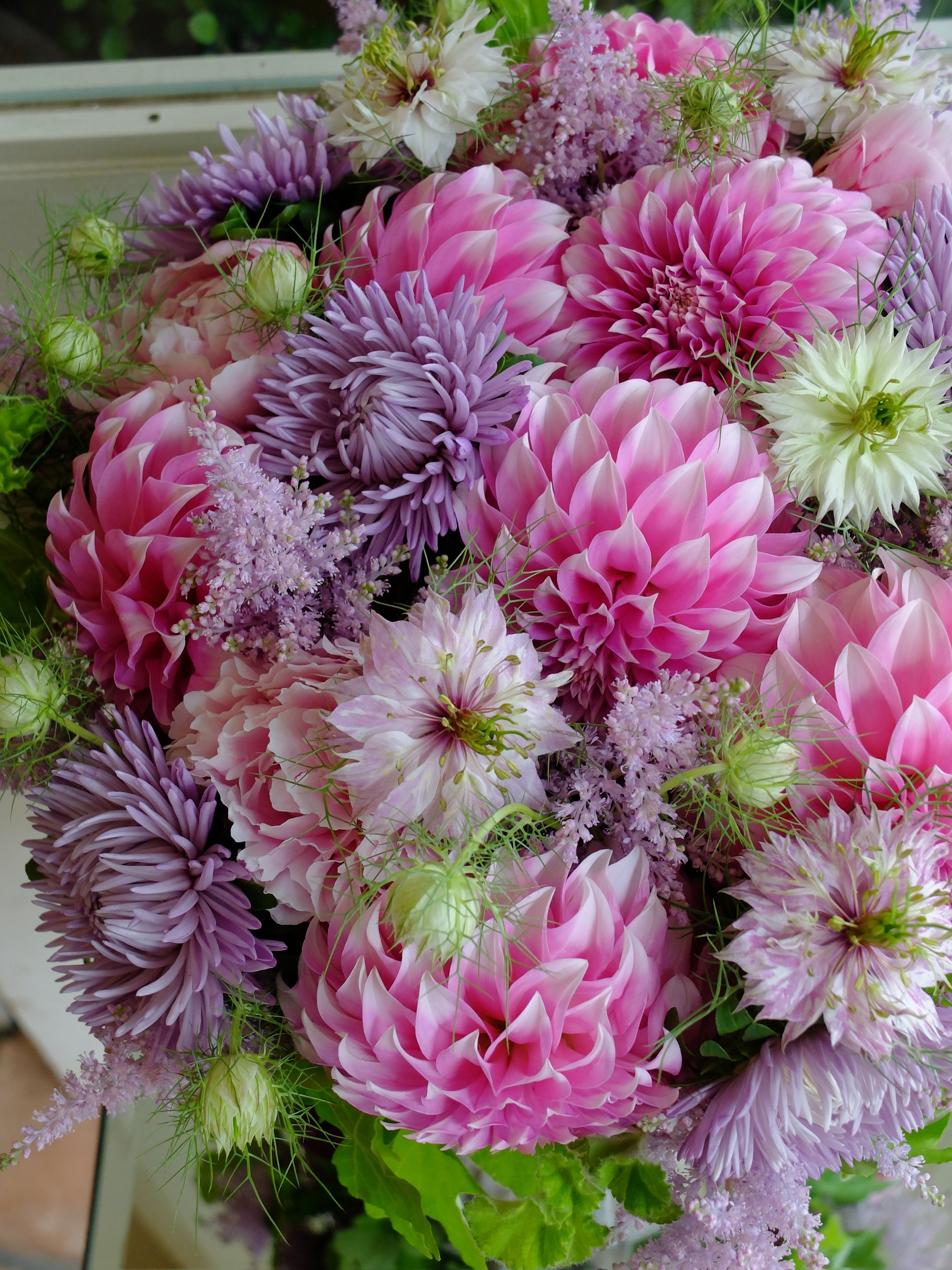Dahliaaster and peony lovely pinterest dahlia peony and flowers