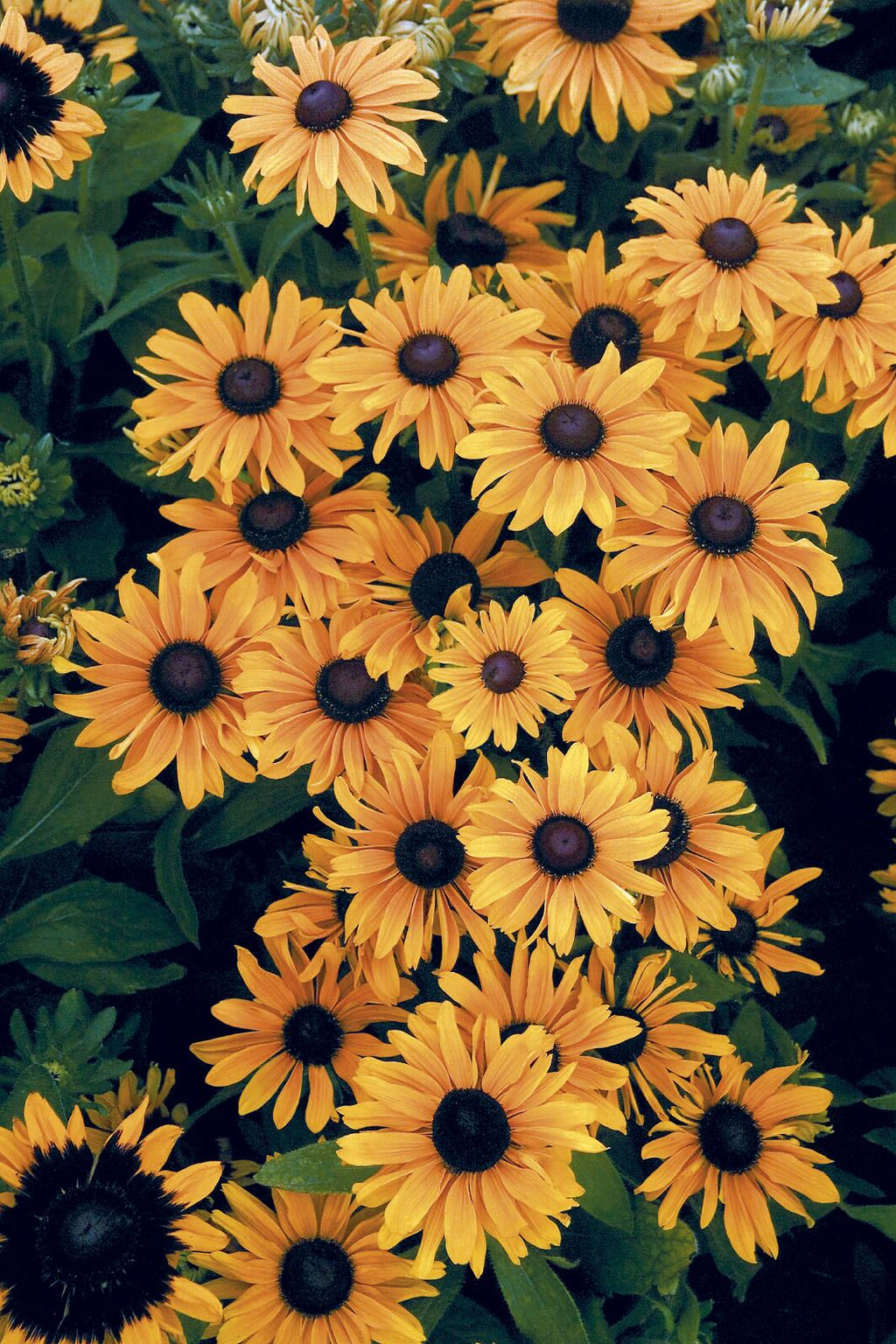 Proven Winners Container Gardens