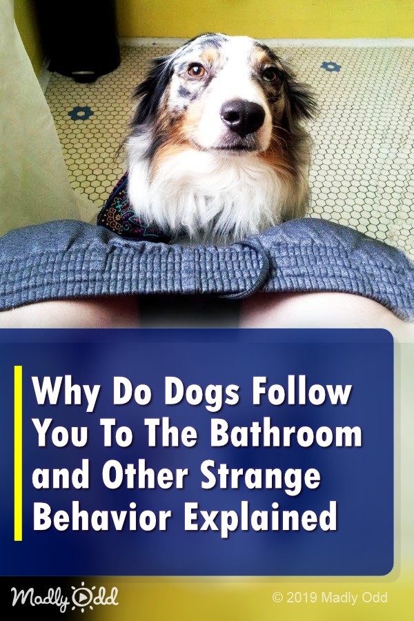 Why Do Dogs Follow You To The Bathroom Fido Has His Reasons Dog Cuddles Dogs Funny Dog Videos