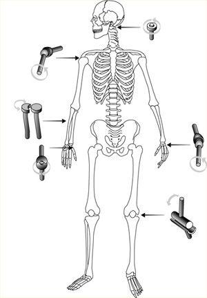 natuurinformatie stijf en soepel botten en
