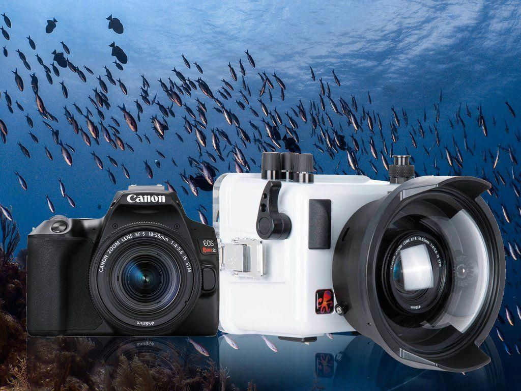 12 Greatest Underwater Cameras For Snorkeling Underwater House Underwater Camera Housing Underwater Camera