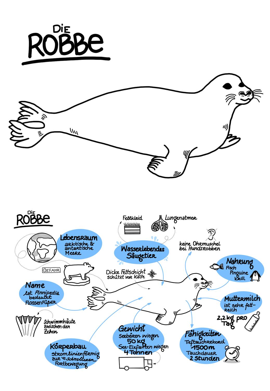 Sketchnote Die Robbe Als Wasserlebendes Saugetier Unterrichtsmaterial In Den Fachern Biologie Sachunterricht Biologie Saugetiere Sketch Note