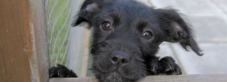 Search Rescue Pets In Need Of Adoption Today Rspca Cute Animals Pet Adoption Animals