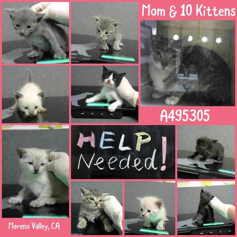 **SUPER URGENT** MOM A495305 Moreno Valley CA As mom