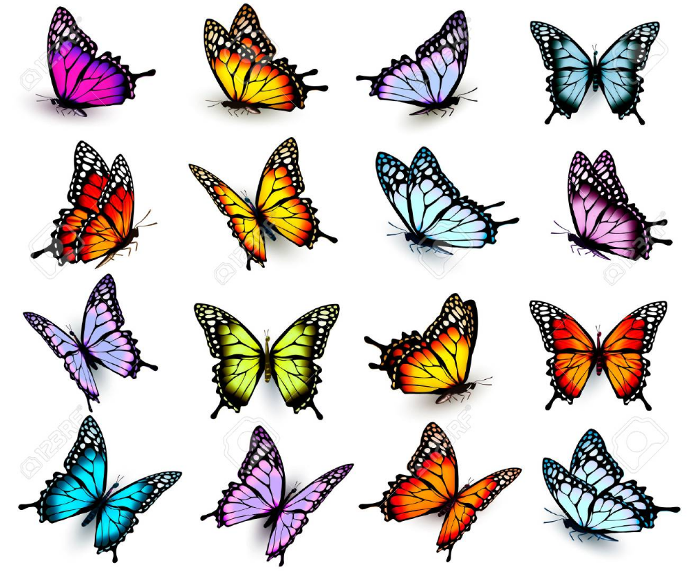 Butterflies Float Animal Fly Green Png Transparent Clipart Image And Psd File For Free Download Butterfly Watercolor Butterfly Illustration Anime Butterfly
