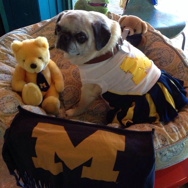 It S Nationaldressupyourpetday Did Not Disappoint Michigan Go