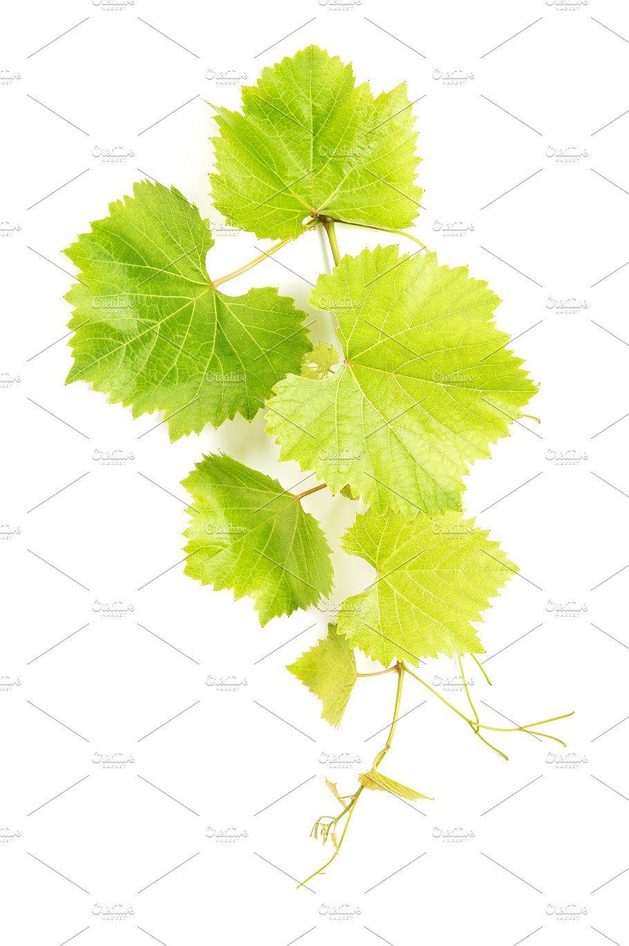Grape Leaves Green Vine Leaf Vine Leaves Grape Leaves Vines