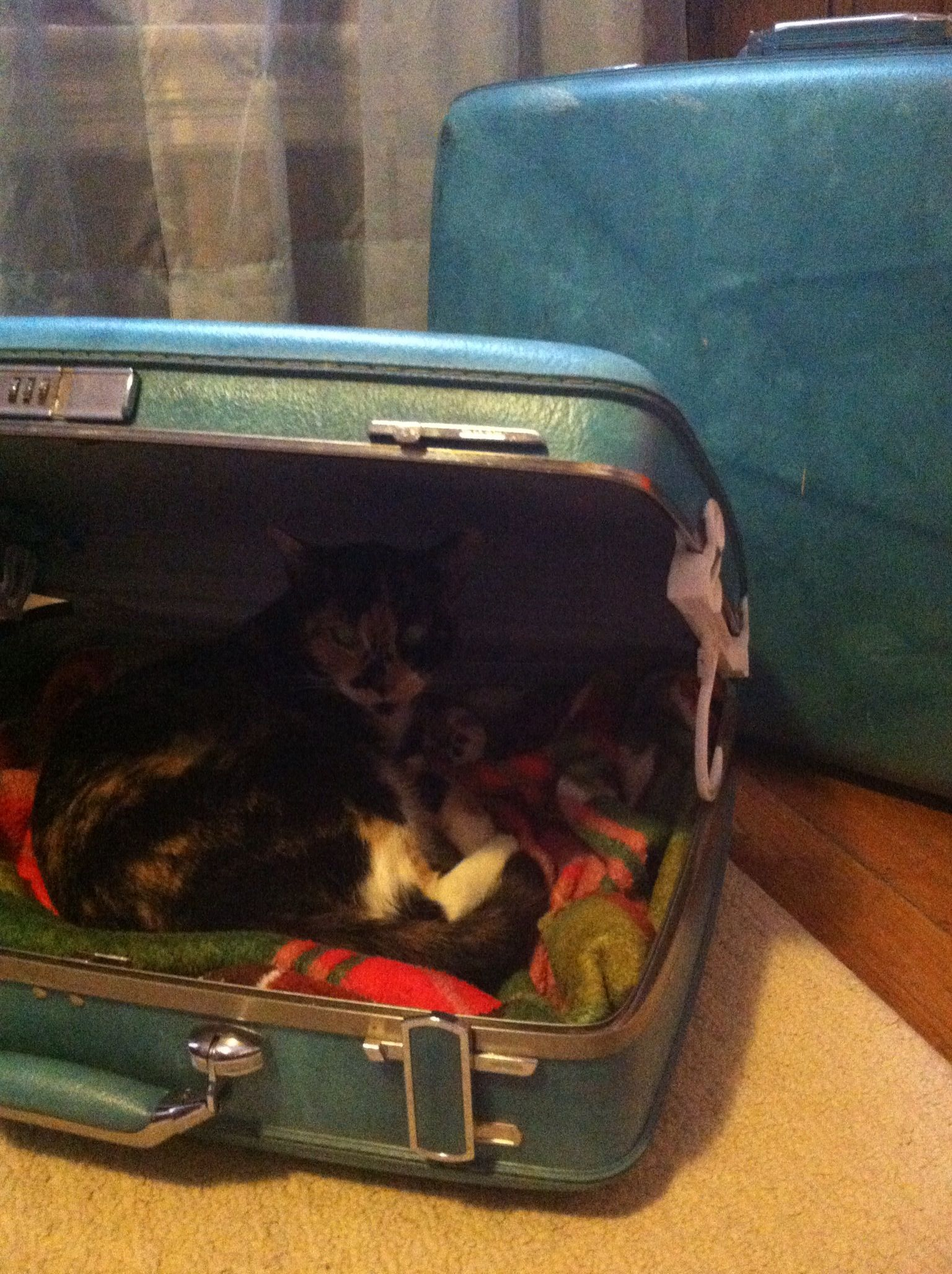 ..DIY pet bed out of a vintage suitcase and hangers. You could always spray paint the hangers to match the suitcase as well. (: ..