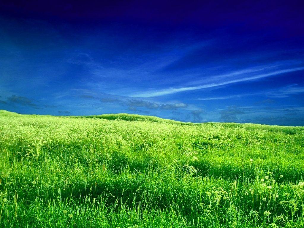 green grass field hd desktop wallpaper : high definition 1080×810