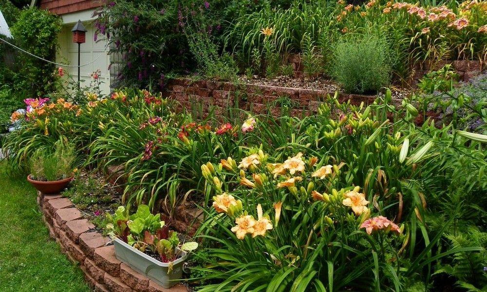 Daylily Garden Design Amazing Daylily Garden Design Ideas To Beautify Your Home Yard Daylily Garden Water Wise Landscaping Garden Planning
