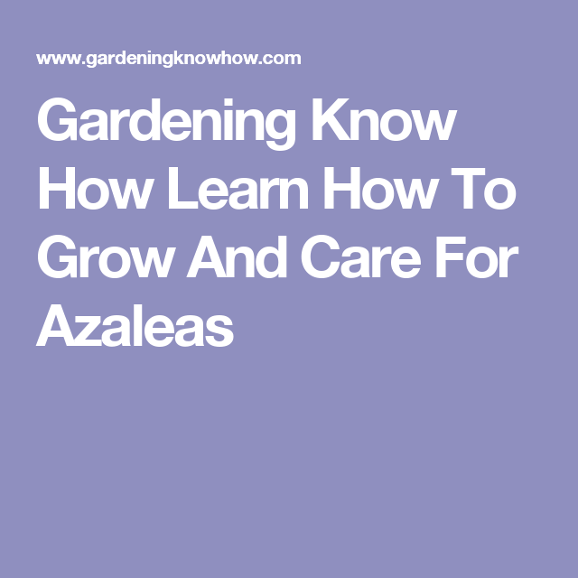 Gardening Know How Learn How To Grow And Care For Azaleas
