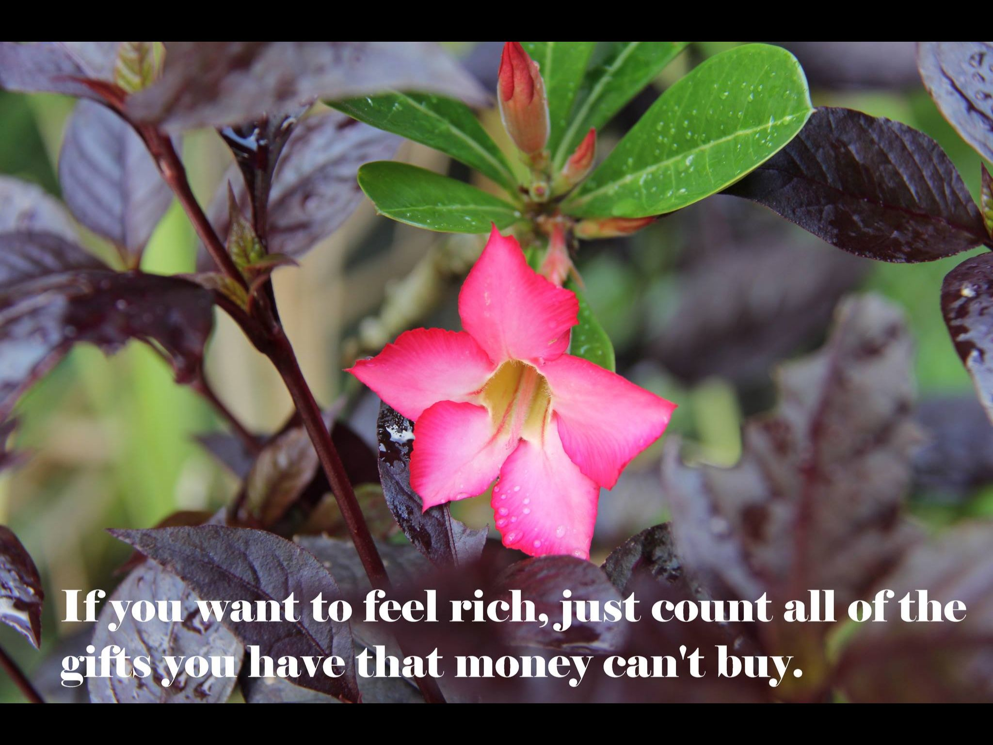 If you want to feel rich, just count all of the gifts you have that money can't buy.
