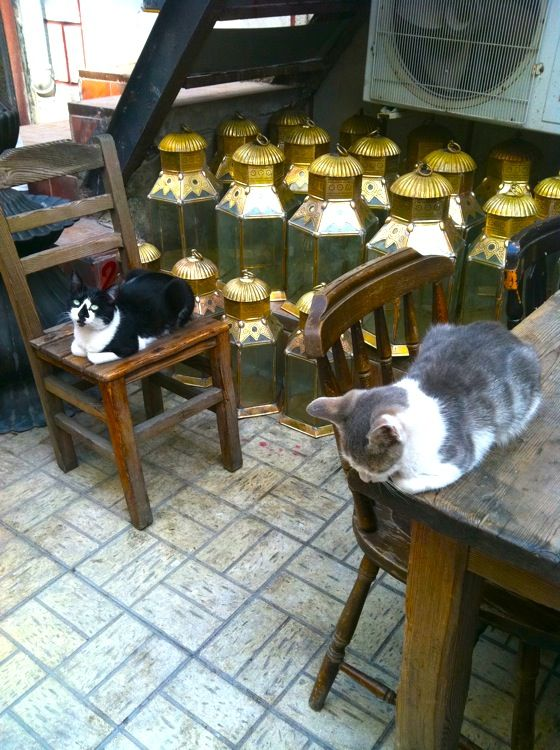Cats sleeping next to lanterns outside of the Grand Bazaar, Istanbul.