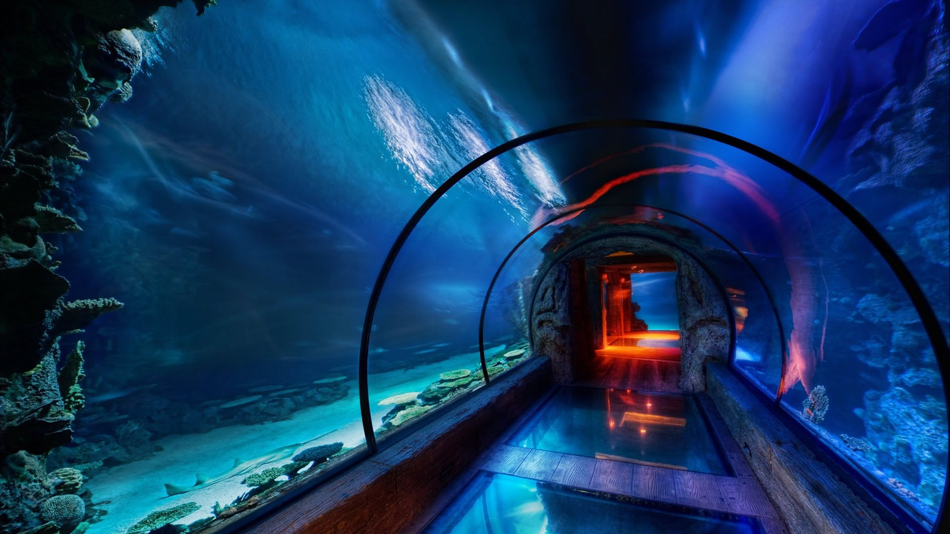 Glass tunnel under the sea images for desktop and wallpaper