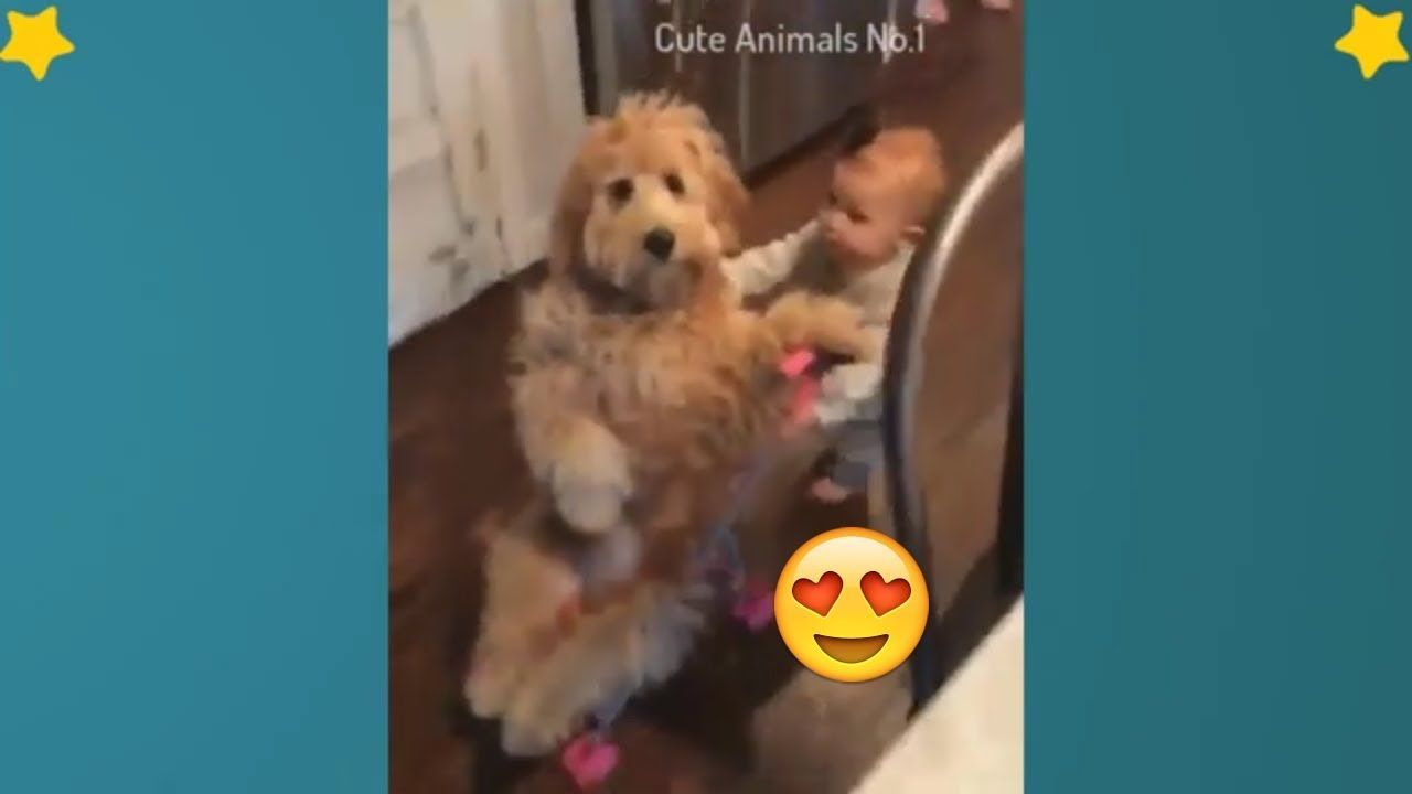 Baby And Dog Baby And Cat Cute Babies And Pets Videos