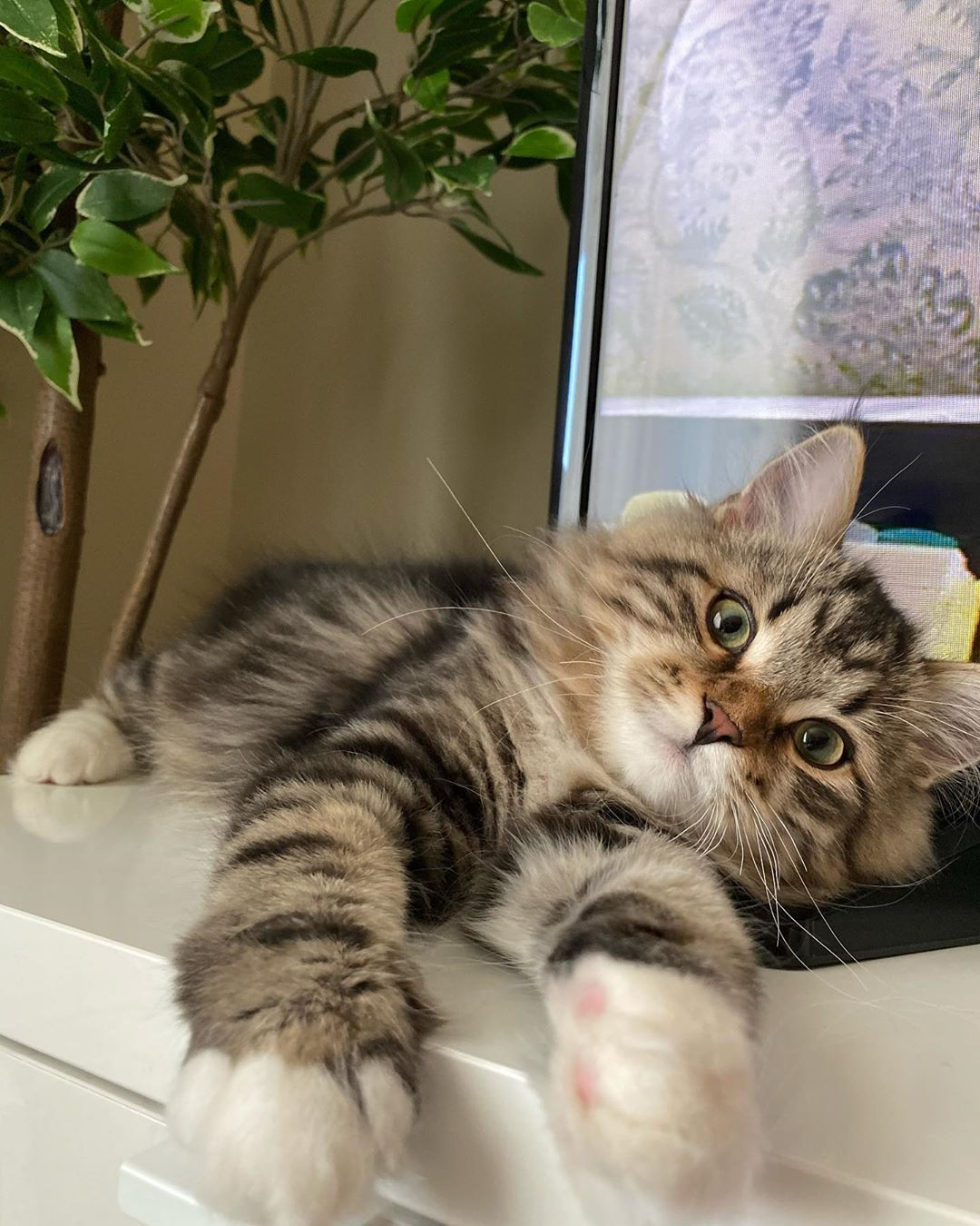 Pin On Cute And Funny Cats