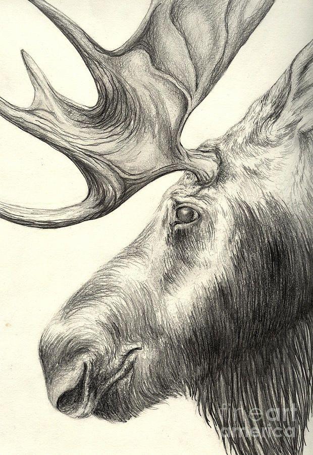 Moose By Aurora Jenson In 2020 Animal Drawings Moose