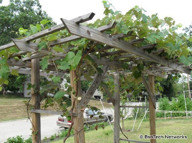 grapevine trellis designs | grape arbor designs steel strong end post  design ideas on webshots .