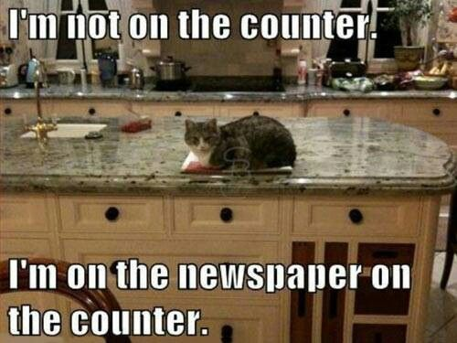 Cat On The Counter Meme Funny Cats And Memes Pinterest Funny