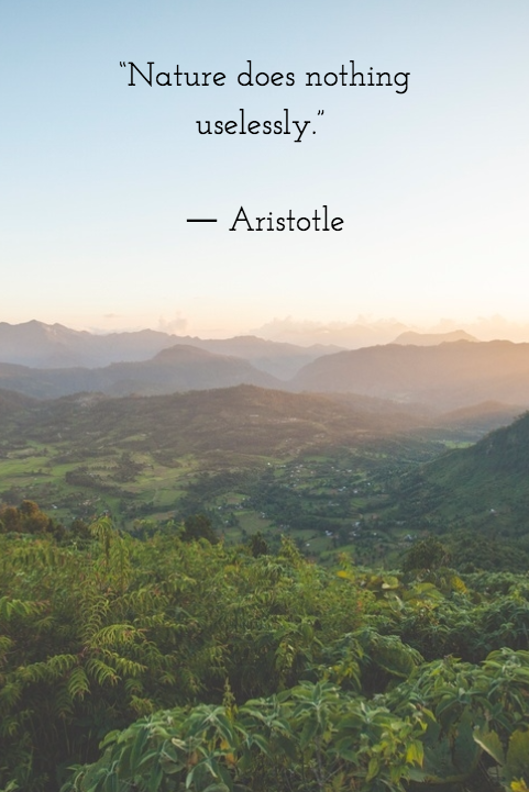 Nature does nothing uselessly, Aristotle | Environment quotes, Wildlife  quotes, Nature quotes