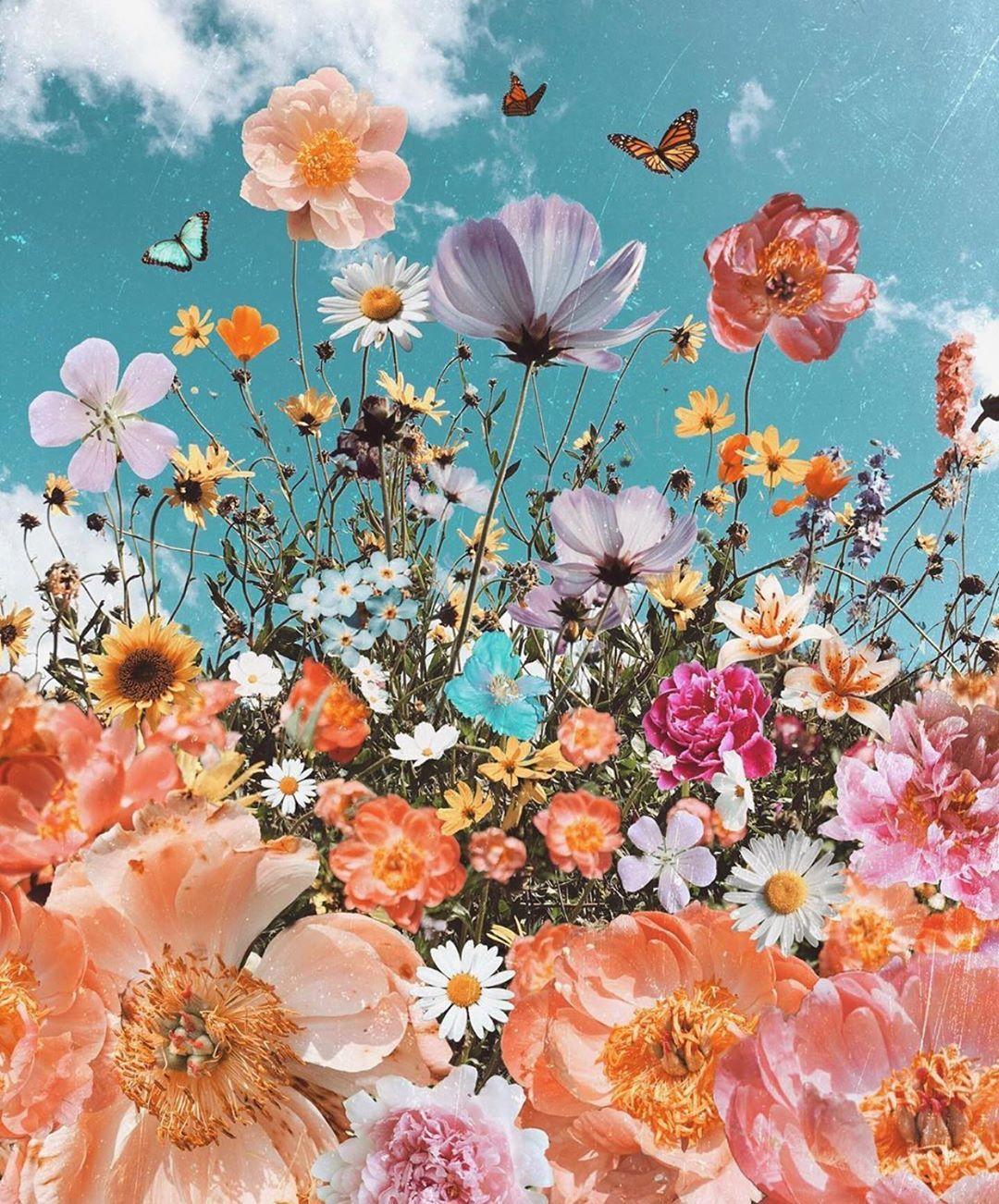 Gambar Mungkin Berisi Bunga Dan Tanaman Aesthetic Iphone Wallpaper Flower Wallpaper Photo Wall Collage