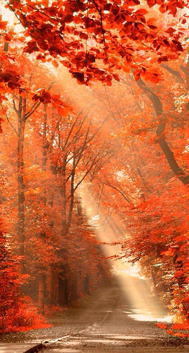 Autumns Mist
