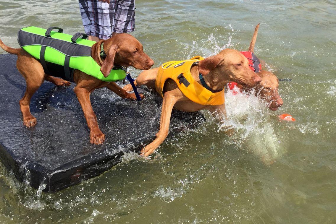 Doberman Puppies For Sale In Richmond Va Ideas