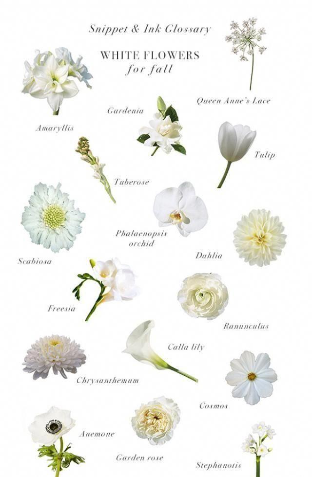 Fiori Bianchi Ottobre.Pin Di S Zhorba Su Botanical 2020 Fiori Per Matrimoni