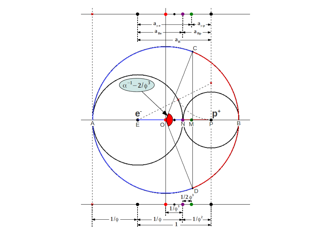 The Golden Ratio Is Also Found In The Ratio Of Anionic To