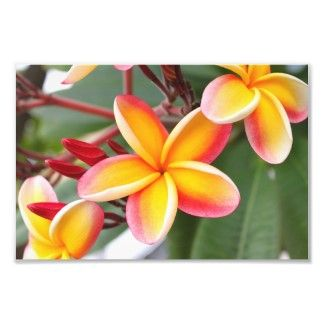 So I Ve Decided My Hummingbird Chest Piece Is Gonna Have Plumeria Flowers Plumeria Flowers Plumeria Hawaiian Tattoo