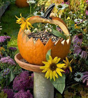 Hollow out a pumpkin & use it as a fall bird feeder..  WHO KNEW A BIRD FEEDER......