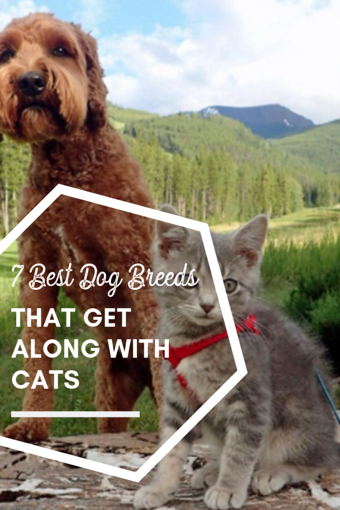 7 Best Dog Breeds That Get Along With Cats Dog breeds