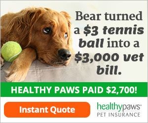 Pin By Word Processing Plus Llc On Dog Health Dog Care Package Pet Insurance Cost Pet Insurance Reviews