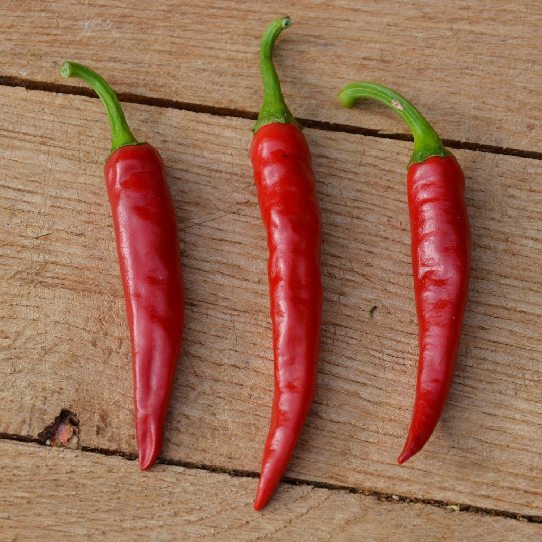 Grow Your Own Serrano Chilli Plant Kit