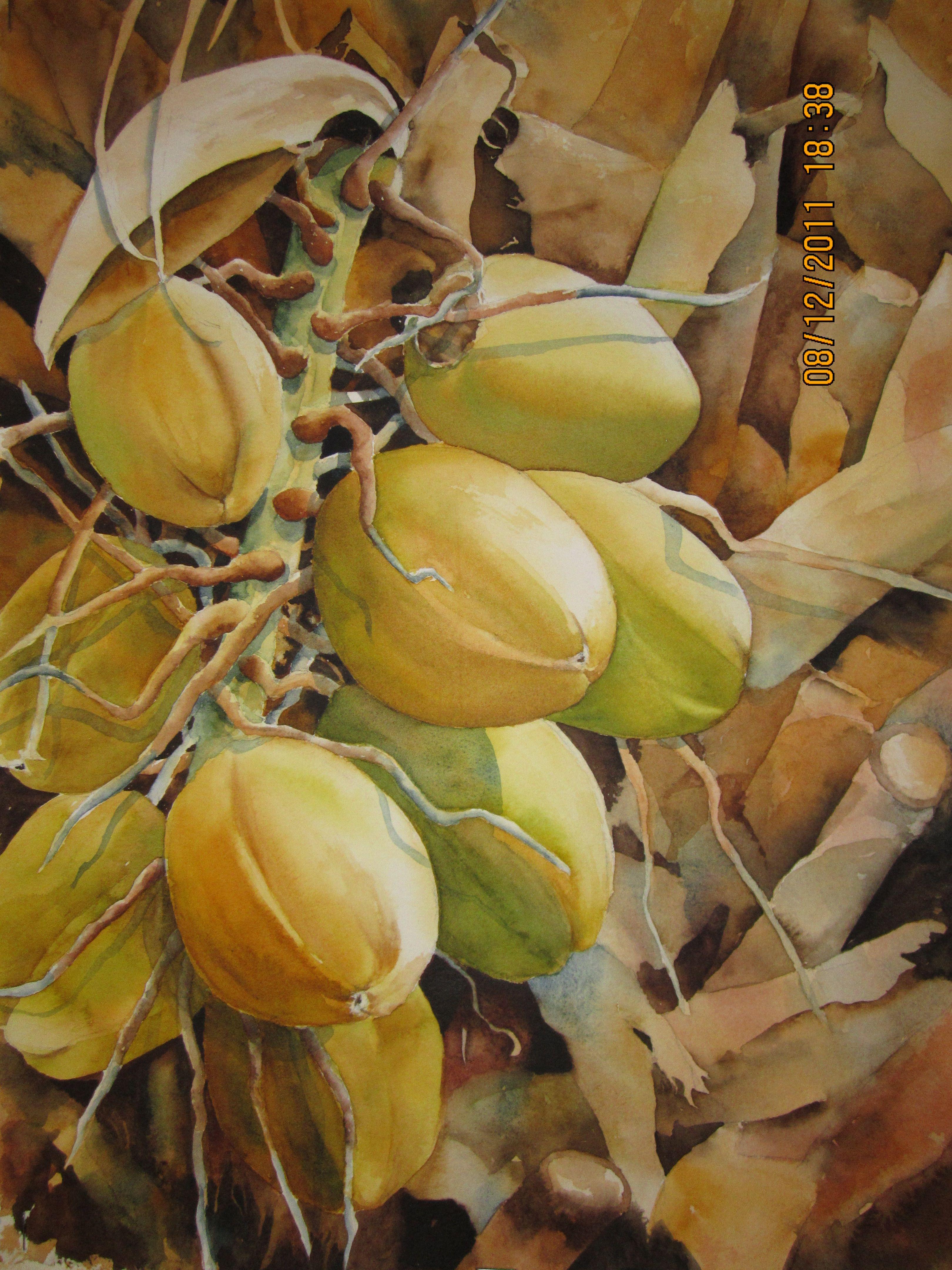 Plenty Coconuts Fruit Painting Watercolor Fruit Food Artists