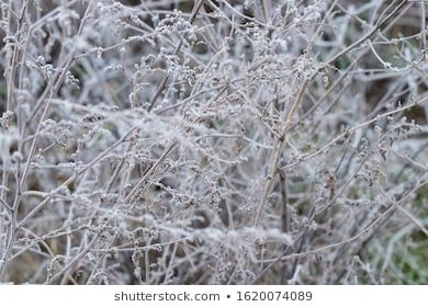 grass frozen in the morning in winter close up texture cold winter frost