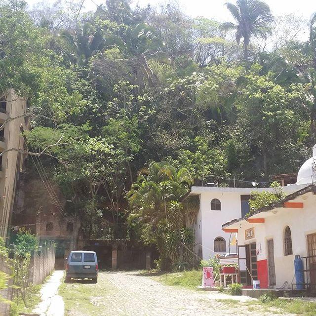 Casas y tiendas entre la selva #SXTNvida