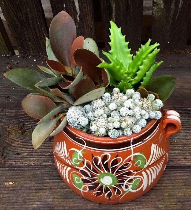Mexican Bean Pot Cactus Succulents Mexican Garden Succulents Succulent Pots
