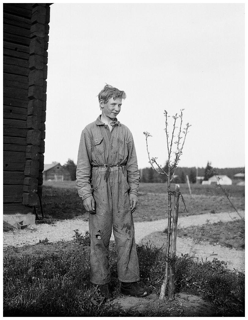 slides/2-08154.jpg 1932, omenapuineen, omenapuu, Pärtti, Pertti Pärtti omenapuineen