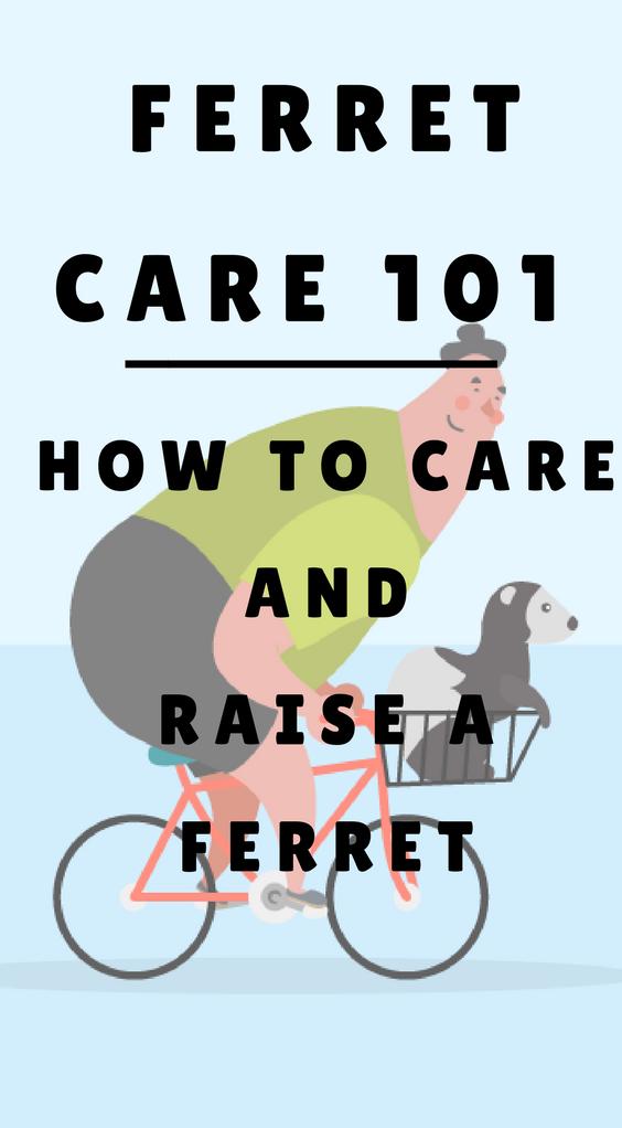 The Ultimate Guide How To Care Raise A Ferret Ferrets Care Ferret Pet Ferret
