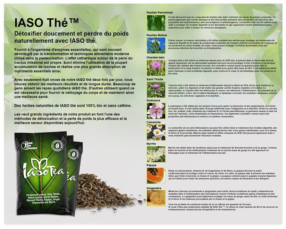 iaso tea how to use