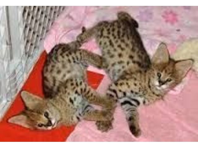 Pretty Kittens For New Homes Animals, Kittens cutest