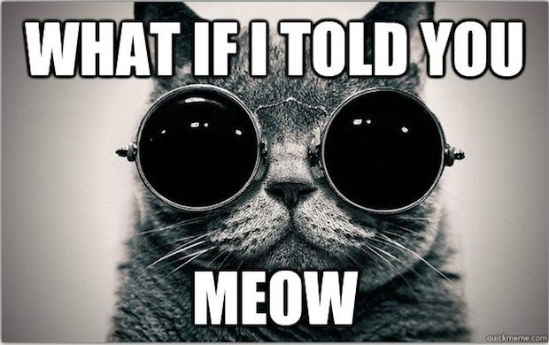 Morpheus Cat Welcome To The Litter Box Of The Real Cat Facts Told You So Funny If you've ever had the blues or been so angry you saw red, then you're familiar with the powerful ways in which color can describe intangible ideas and emotions. pinterest