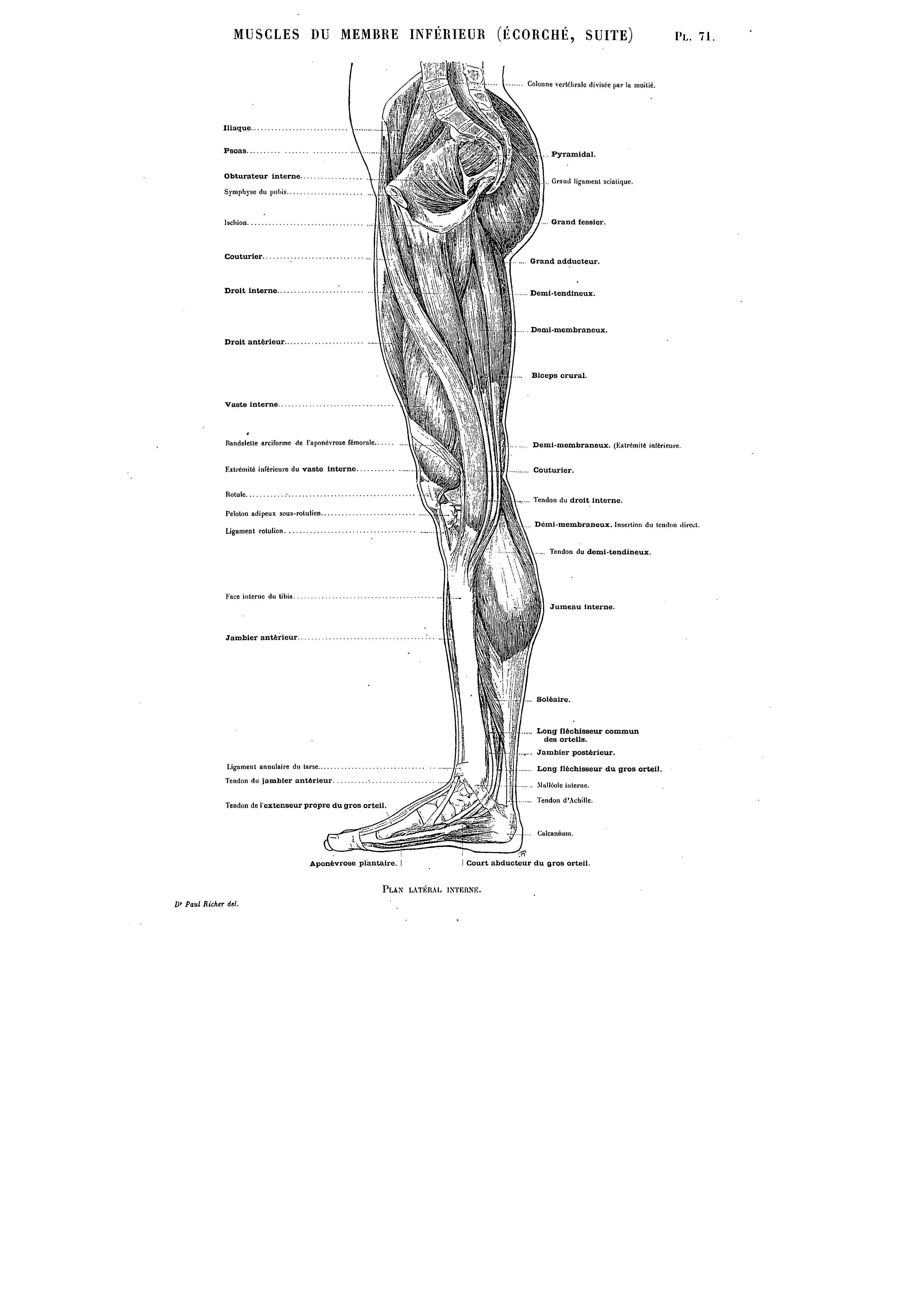Pin by Sarah Griffith on Artistic anatomy   Pinterest   Artistic ...