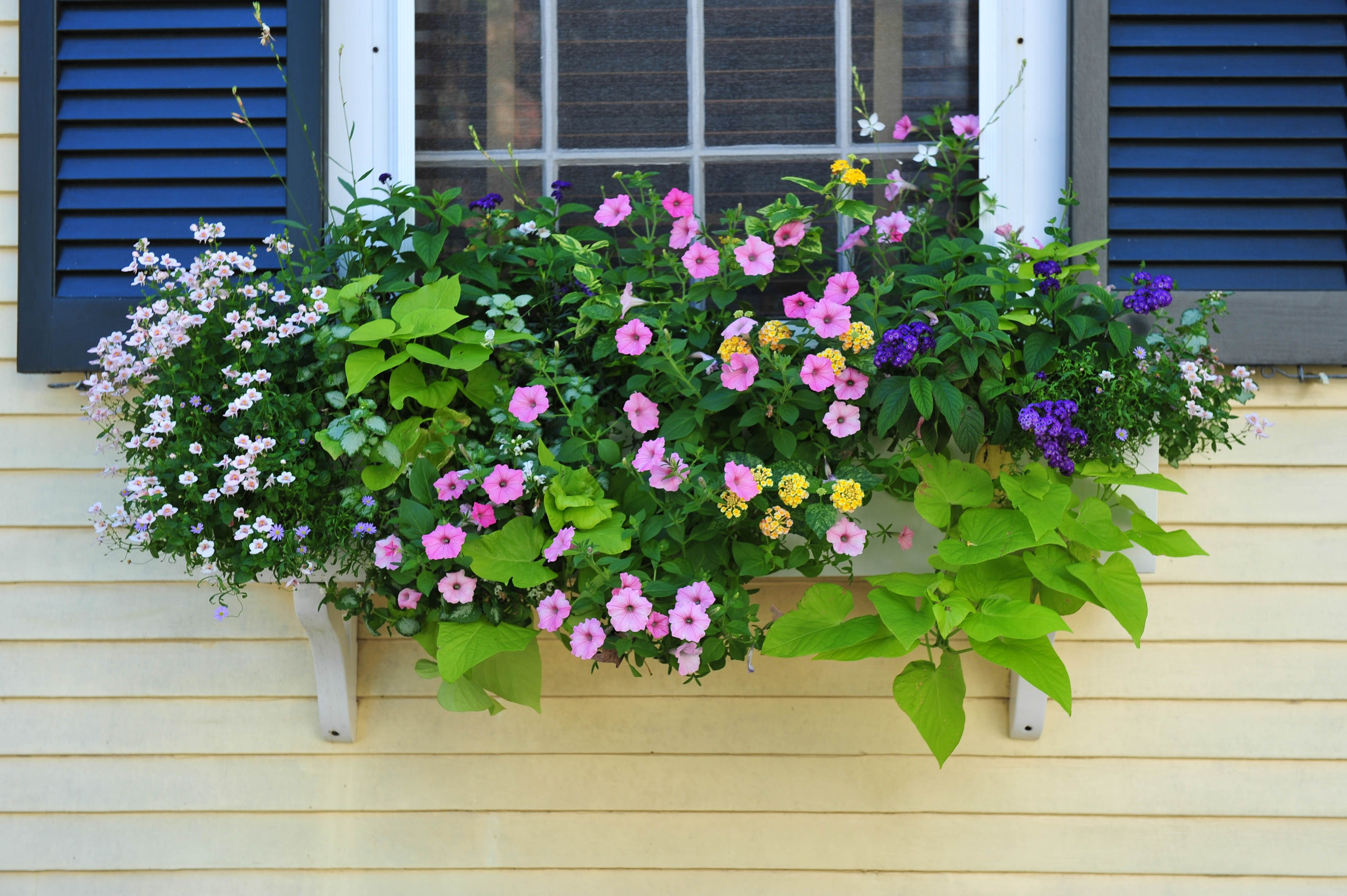 nantucket window boxes Get to Know Nantucket