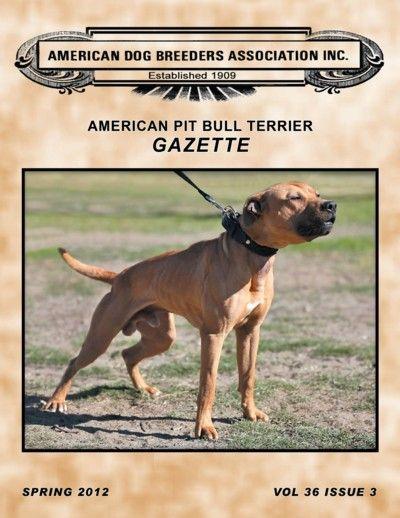 American Dog Breeders Association American Pitbull Terrier