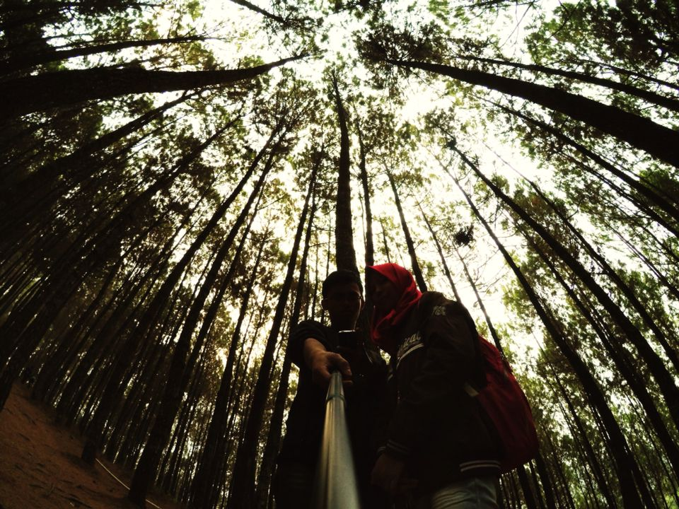 dibawah pohon rrindang hutan pinus bukit moko duotraveling